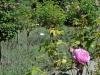 roseninsel-rosarium-4